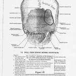Dr. Charles Crenshaw Description